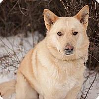 Adopt A Pet :: Red - Saskatoon, SK