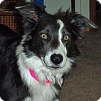 Adopt A Pet :: Maddy - Glenrock, WY