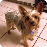 Adopt A Pet :: Gertie - Miami, FL