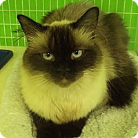 Adopt A Pet :: Ming - Memphis, TN