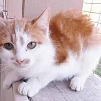 Adopt A Pet :: pumpkin - Prestonsburg, KY