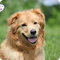 Adopt A Pet :: Mia - Lee's Summit, MO