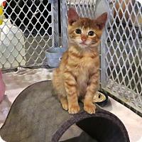 Adopt A Pet :: Elodee - Geneseo, IL