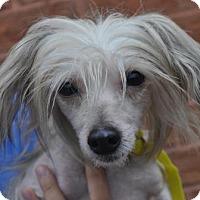 Adopt A Pet :: Frenchie - Atlanta, GA