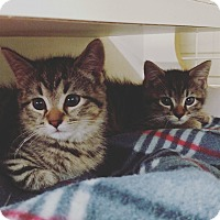Adopt A Pet :: Darth Vader and Luke Skywalker - Fredericksburg, VA