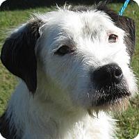 Adopt A Pet :: Dame Judi Dench - Jersey City, NJ