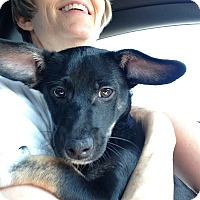 Adopt A Pet :: DECKER - Higley, AZ