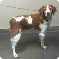 Adopt A Pet :: CA(LA)/Coco - Oroville, CA