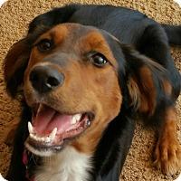 Adopt A Pet :: Scully - Charlotte, MI