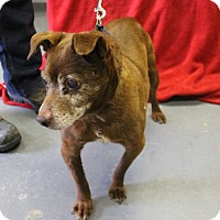 Adopt A Pet :: Fisher - Delaware, OH