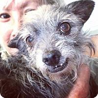 Adopt A Pet :: Daffodil - Los Angeles, CA