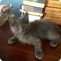 Adopt A Pet :: La Petite - Sterling Hgts, MI
