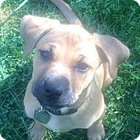 Adopt A Pet :: Aveda - Dayton, OH