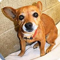 Adopt A Pet :: Carol - San Jacinto, CA
