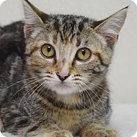 Adopt A Pet :: Posie - Dublin, CA
