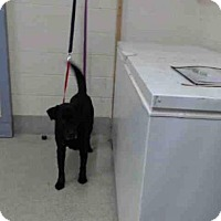 Adopt A Pet :: MIDNIGHT - Tavares, FL