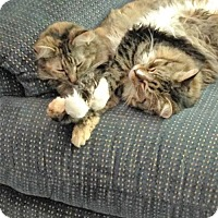 Adopt A Pet :: Grace & Mr. Smitty Courtesy Post - Absecon, NJ