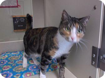 Domestic Shorthair Cat for adoption in Ottawa, Kansas - Empress