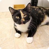 Domestic Shorthair Cat for adoption in McKenzie, Tennessee - Clarissa