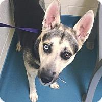 Adopt A Pet :: Valeska - Portland, ME