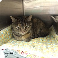 Adopt A Pet :: Ryder - Lunenburg, MA