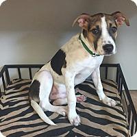 Adopt A Pet :: Buster - Covington, LA