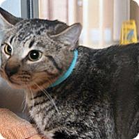 Adopt A Pet :: Parker - Wildomar, CA