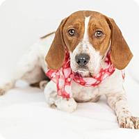 Adopt A Pet :: Jackie - Bedford, IN