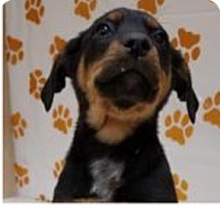 Adopt A Pet :: Reese - Patterson, NY