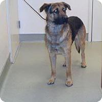 Adopt A Pet :: Diesel - Wildomar, CA