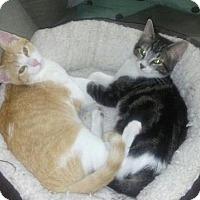 Adopt A Pet :: Mimi C1409 & Jules C1408 (Bonded Pair) - Shakopee, MN