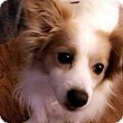 Adopt A Pet :: Max - Adoption Pending!