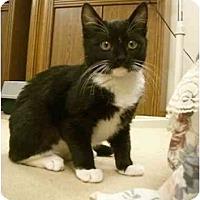 Adopt A Pet :: Maron - Davis, CA