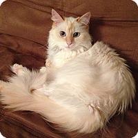 Adopt A Pet :: Bonnie - Fairborn, OH