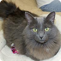 Adopt A Pet :: Char Char - Bonita Springs, FL
