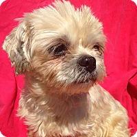 Adopt A Pet :: Cassie - Elkhart, IN