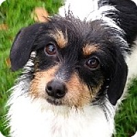 Adopt A Pet :: Ace Amore - Houston, TX