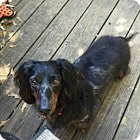 Adopt A Pet :: Paddy - Decatur, GA