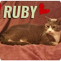 Adopt A Pet :: Ruby - Brooklyn, NY