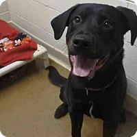 Adopt A Pet :: SAMPSON - Anchorage, AK