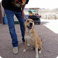 Shar Pei/Shepherd (Unknown Type) Mix Dog for adoption in Golden Valley, Arizona - Jazmine