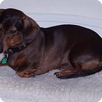 Adopt A Pet :: Coco - Jacobus, PA