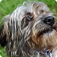 Adopt A Pet :: NINA - New Iberia, LA