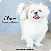 Shih Tzu Mix Dog for adoption in Modesto, California - Elmer