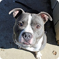 Adopt A Pet :: Mooch - Troy, MI