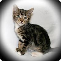 Adopt A Pet :: Jade - Bradenton, FL
