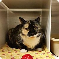 Adopt A Pet :: Paige - Idaho Falls, ID