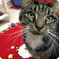 Adopt A Pet :: Wynonna - Janesville, WI