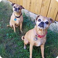 Adopt A Pet :: Emma & Mattie - Von Ormy, TX
