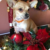 Adopt A Pet :: Ellie - Willingboro, NJ